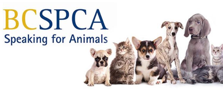 Proud Sponsor of the BC SPCA