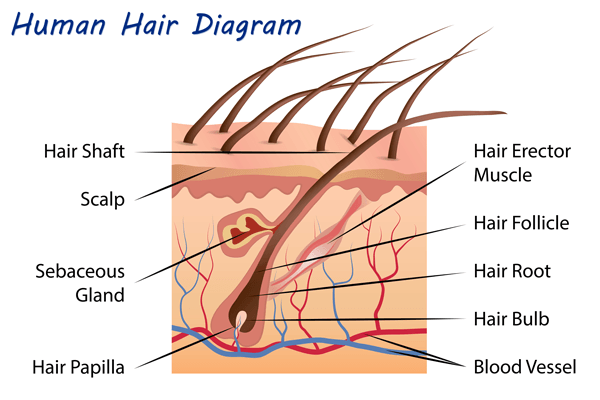 A Guide to Electrolysis vs  Laser Hair Removal